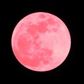 luna rosada